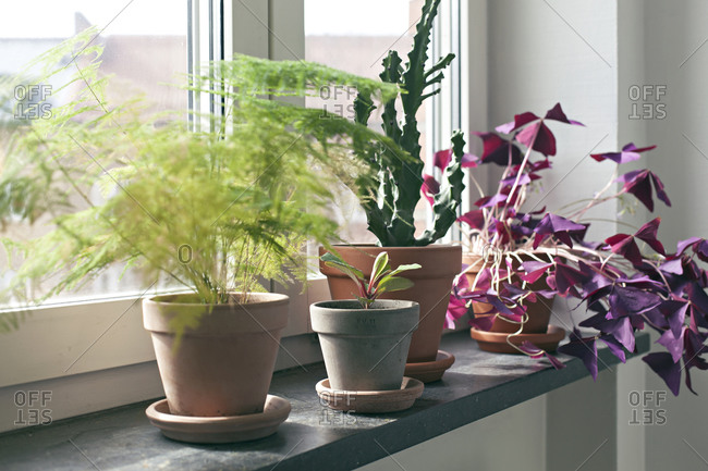 Various house plants on dark stone window frame