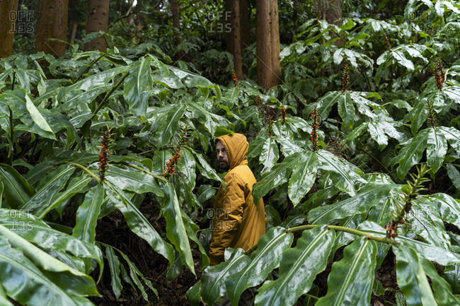 Man standing in forest surrounded by huge leaves- Sao Miguel Island- Azores- Portugal