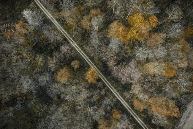 Germany- Baden-Wurttemberg- Freiburg im Breisgau- Aerial view of empty dirt road cutting through autumn forest