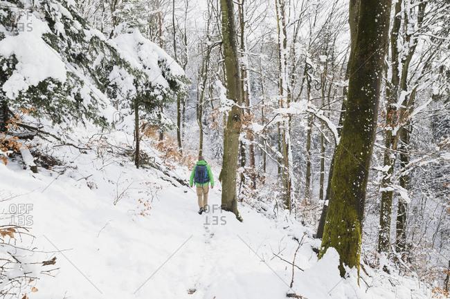 Germany- North Rhine-Westphalia- Lone backpacker hiking in snow-covered forest in High Fens Eifel Nature Park
