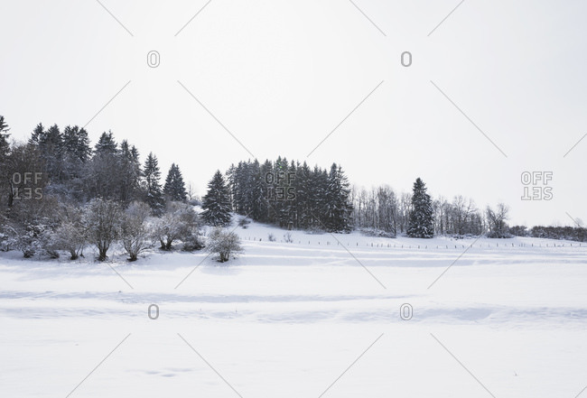 Germany- North Rhine-Westphalia- Clear sky over snow-covered landscape of High Fens Eifel Nature Park in winter