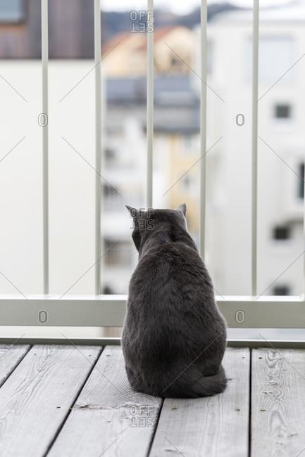 Germany- Rear view of black British Shorthair cat sitting on balcony
