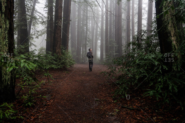 Man explores large clearing in foggy mysterious redwood forest