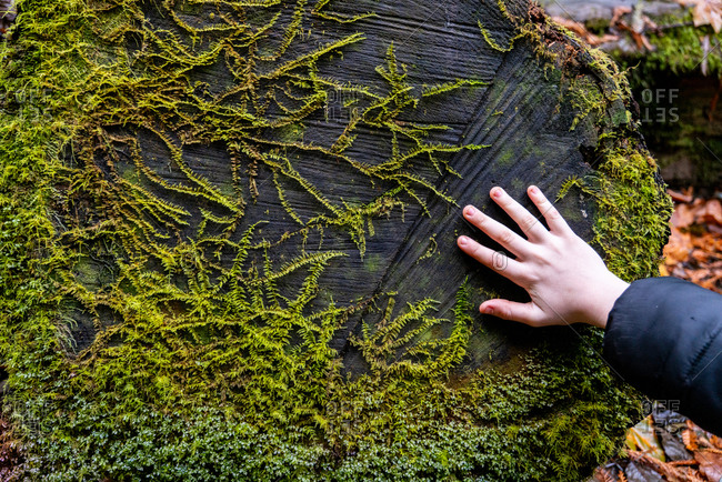 Young person's hand touching tree trunk with plant life growing on it
