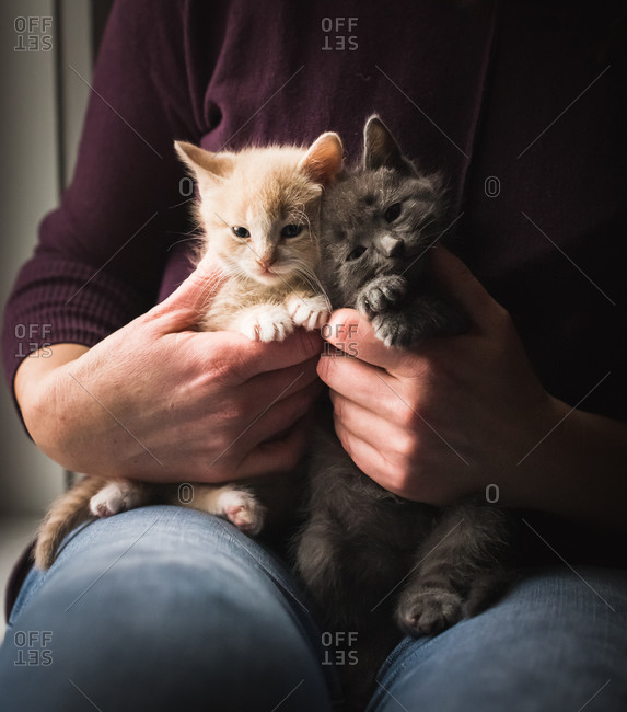 Close up of female hands holding two small kittens on her lap.