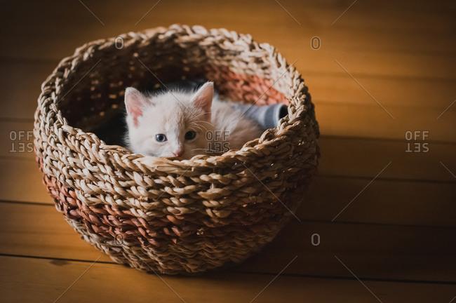 Cute tan kitten peeking out over the top of a wicker basket.