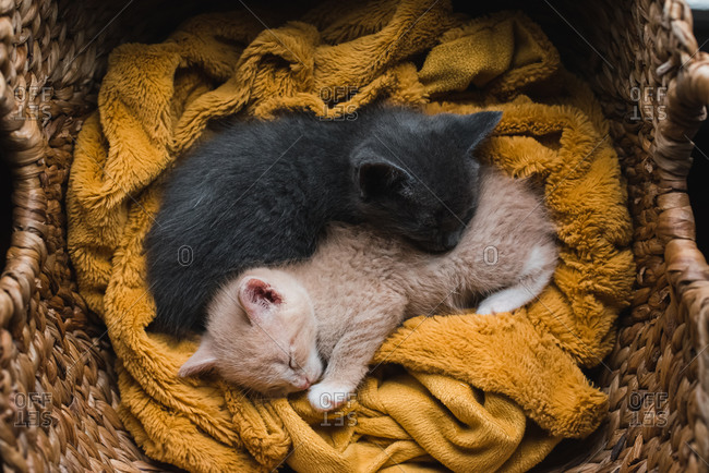 Two kittens curled up asleep together on a blanket in a wicker basket.