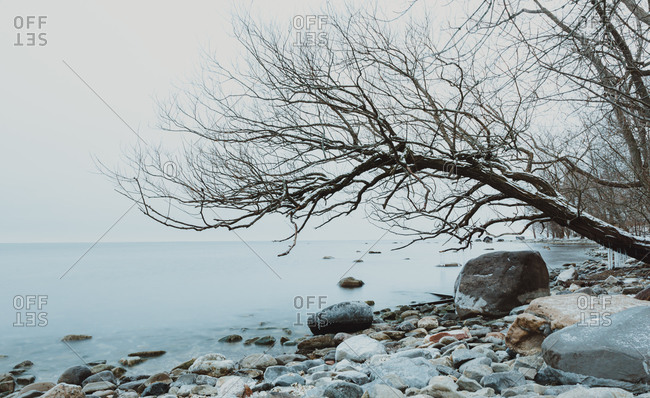 Tree leaning over water on the rocky shoreline of a lake in winter.
