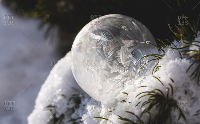 Close up of frozen soap bubble in snow covered tree on a winter's day.