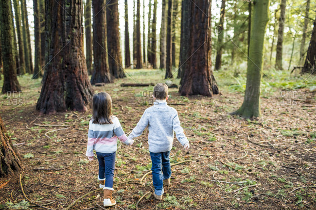 Rear view of cute kids walking through the forest.