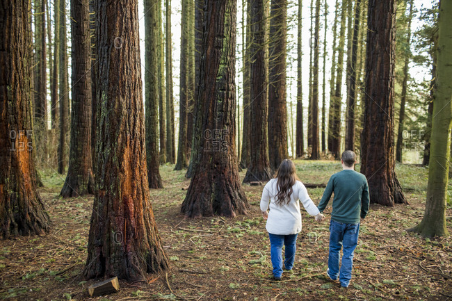 Rear view of heterosexual couple walking through forest holding hands