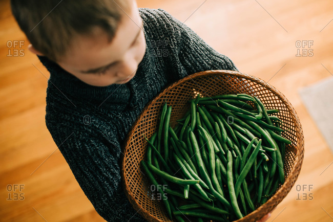 Little boy holding a basket of freshly picked green beans.