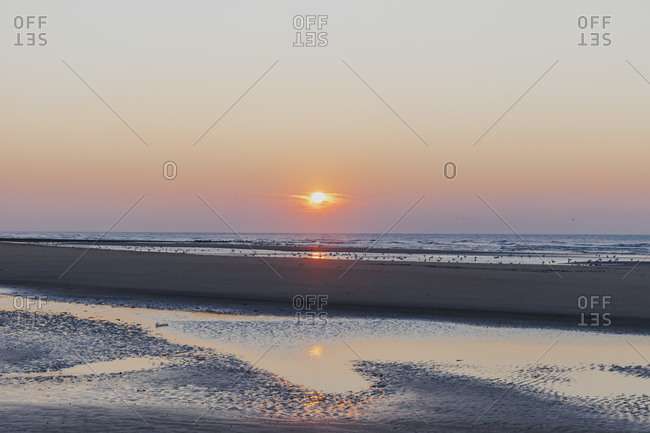 Distant view of silhouette seagulls on shore at beach against orange sky during sunset- North Sea Coast- Flanders- Belgium