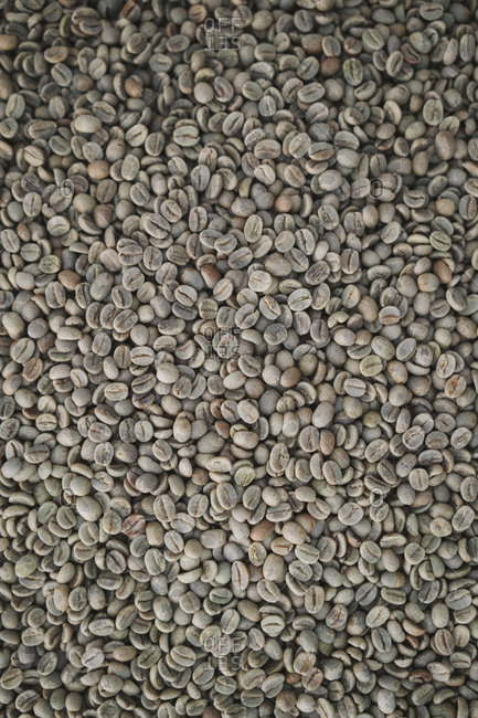 Roasted coffee beans laid out