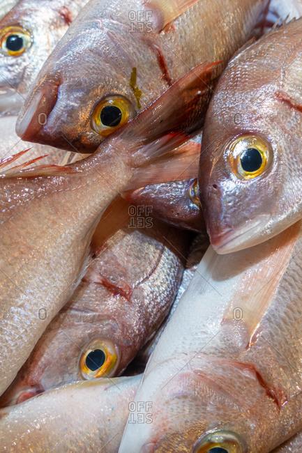 Fresh Bica fish in Portuguese fish market, Algarve, Portugal