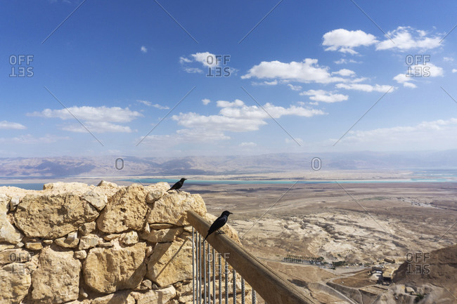 Birds Atop Masada Fort Ruins, Israel