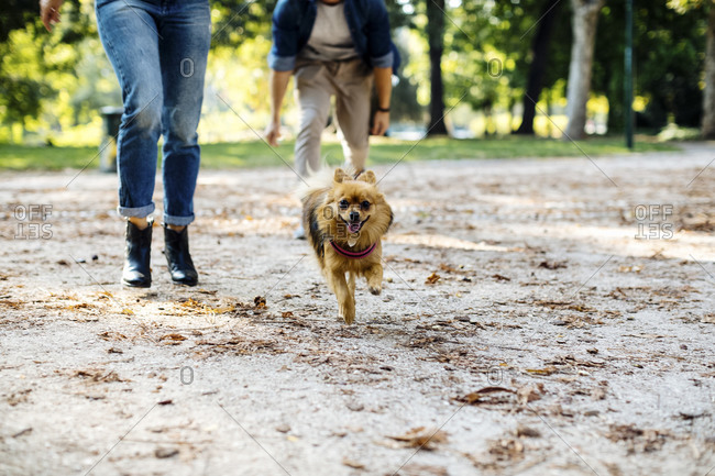 Dog running on a path in a park