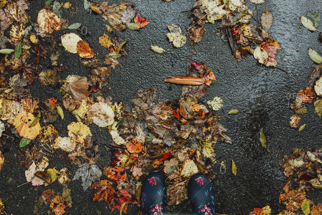 Wet leaves on the ground on a rainy fall day