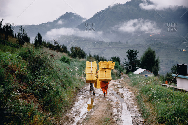 Rear view of workers carrying yellow crates up hillside
