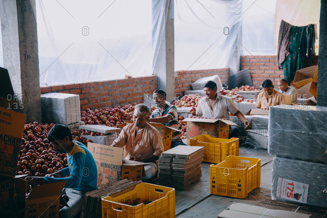 Rohru, Shimla, Himachal Pradesh, India - August 4, 2017: Apple grading, sorting and packing at a production facility in the Himalayas