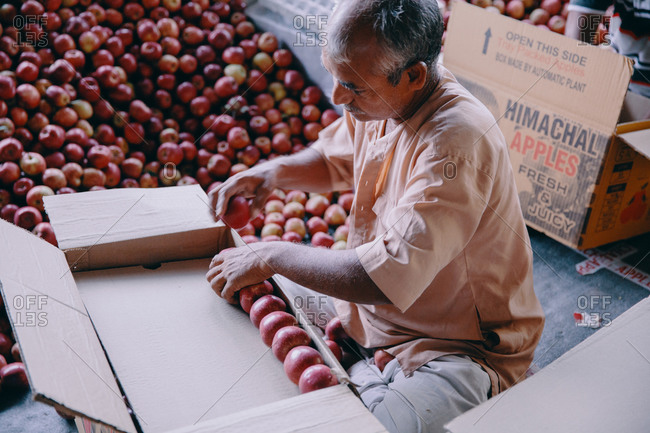 Rohru, Shimla, Himachal Pradesh, India - August 4, 2017: Man sorting and packing apples at a production facility in the Himalayas