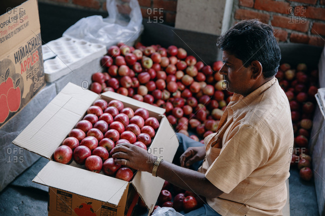 Rohru, Shimla, Himachal Pradesh, India - August 4, 2017: Man packaging apples at a production facility in the Himalayas