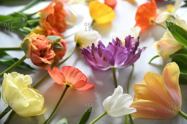 Variety of colorful flowers on white background