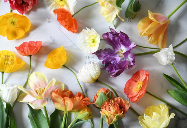 Variety of beautiful flowers on white background