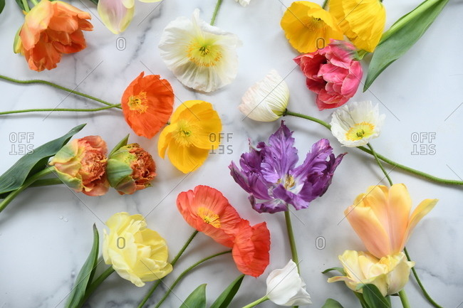 Colorful flowers on white marble surface