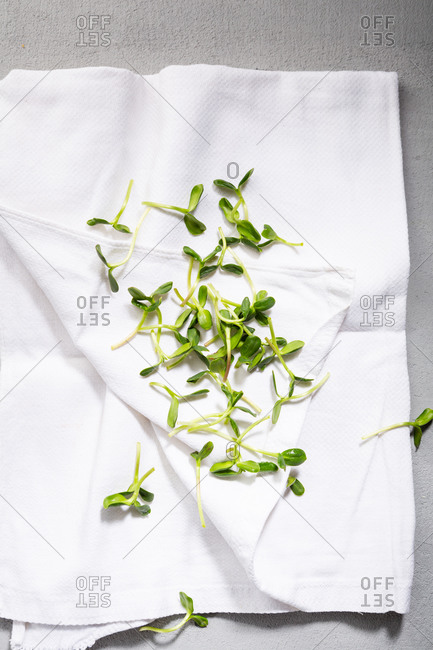 Fresh micro greens on white kitchen cloth
