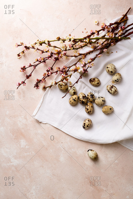 Quail eggs and blossom branch on light surface