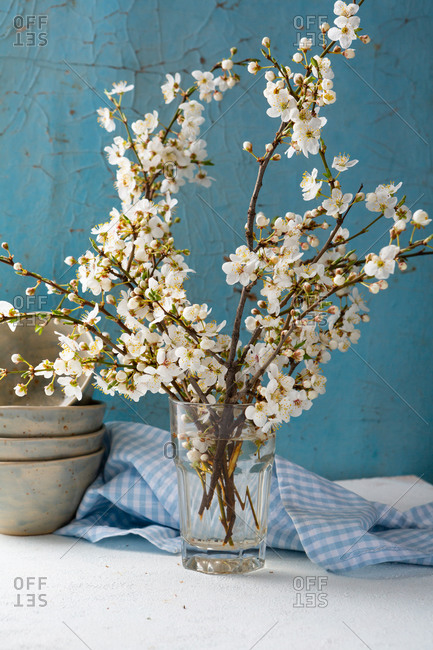 Cherry blossom twigs on white table