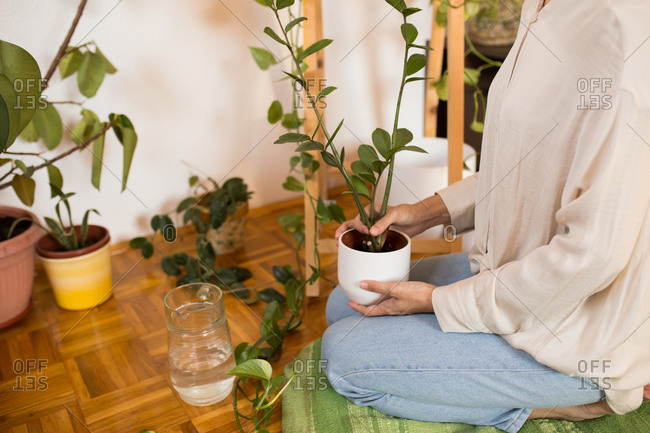 Woman planting new plants at home