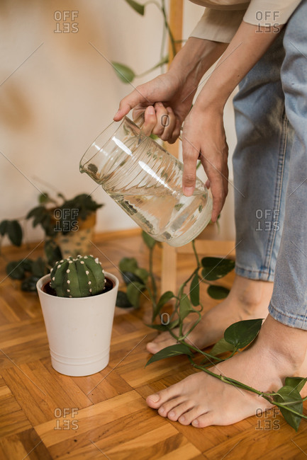 Woman watering succulent at home