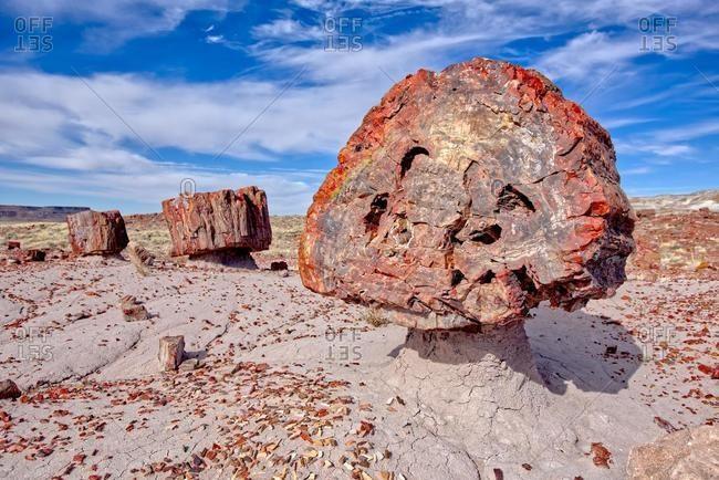 Broken Petrified Wood, Jasper Forest, Petrified Forest National Park, Arizona, USA