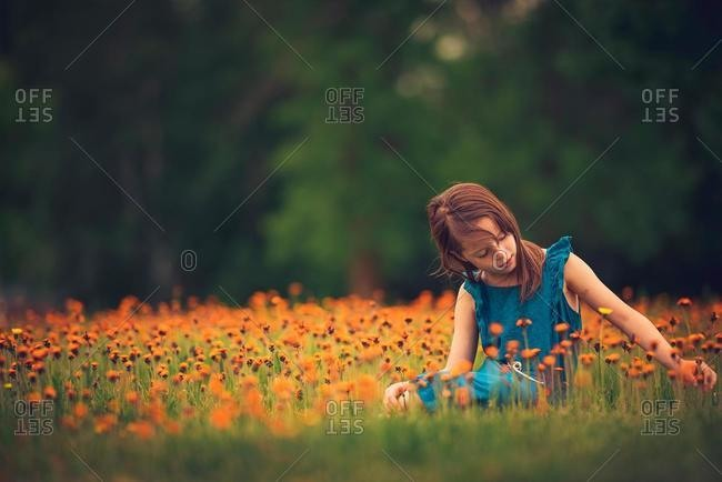 Girl sitting in a meadow picking wildflowers, USA