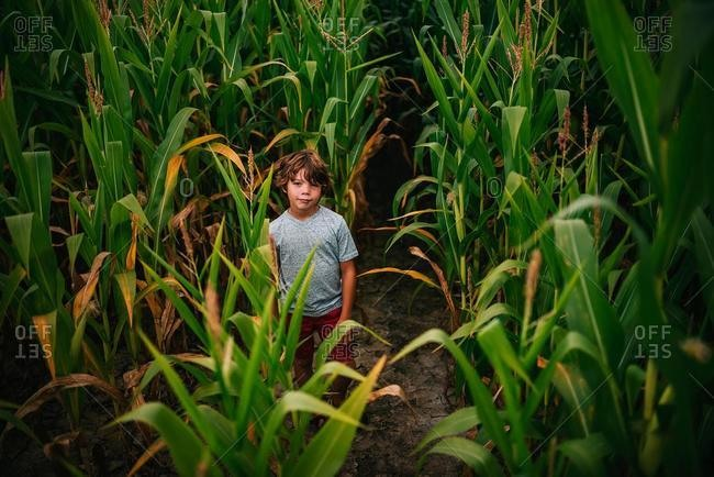 Boy standing in a corn field, USA