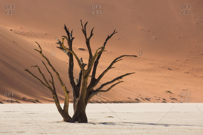Dead tree, Dead Vlei, Namib Naukluft National Park