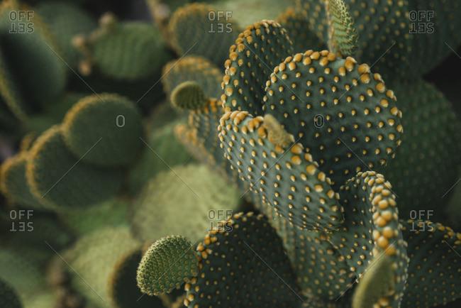 Details of a cactus plant with orange pricks