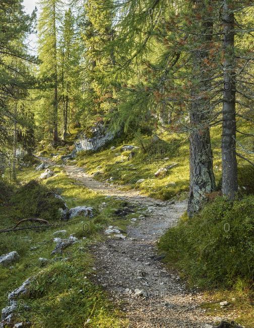 Hiking path to Lake Federa, mountain forest, Passo di Giau, Veneto, Italy