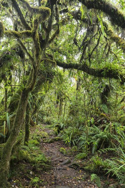 Path in Foret de Bebour, Reunion, France