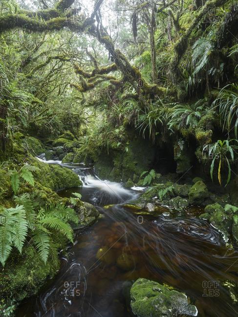 Gorge in Foret de Bebour, Reunion, France