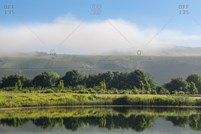 Moselle landscape with morning mist.
