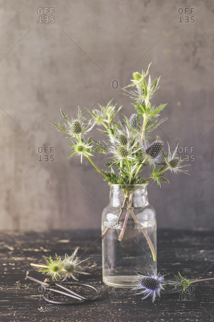 Blue thistle branches in a glass vase in front of a dark vintage background