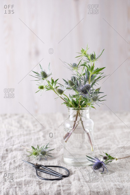 Still Life Blue thistle branches in a simple glass vase on a light linen cloth