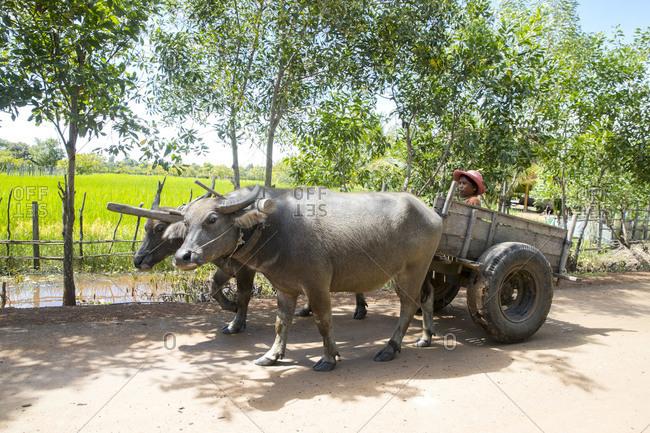 Street scene, water buffalo pulling a cart