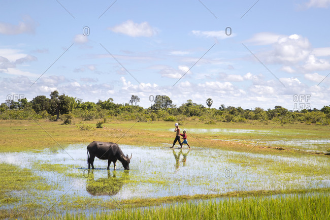 along the way, agriculture, travel fields, farmhouse, water buffalo, country road