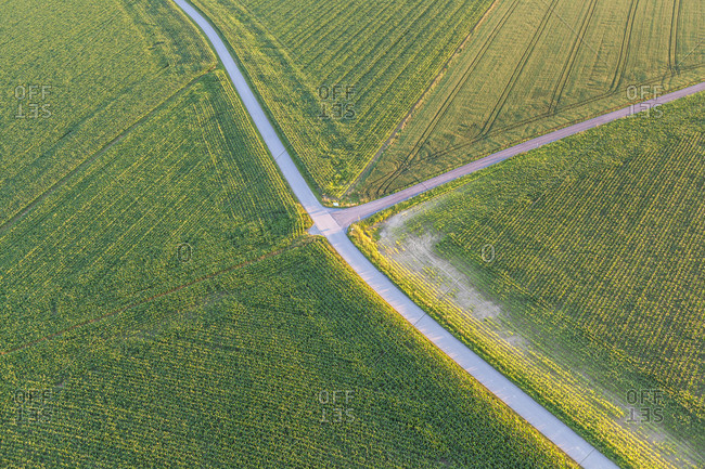 Road through corn fields at Chieming am Chiemsee, Chiemgau, Upper Bavaria, Bavaria, southern Germany, Germany, Europe