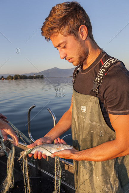 July 1, 2015: Chiemseerenke (whitefish) caught by the fisherman Thomas and Florian Lex from the Fraueninsel on the Chiemsee, Frauenchiemsee, Chiemsee, Chiemgau, Upper Bavaria, Bavaria, southern Germany, Germany, Europe