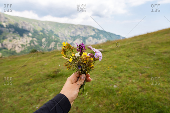 Flowers in the hand of a woman on a background of nature.